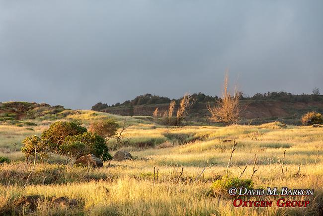 Lanai Landscape