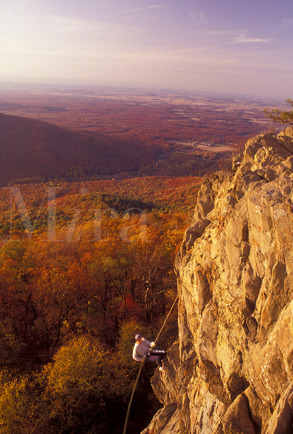 AJ3141, rock climbing, Blue Ridge, Virginia, Blue Ridge Mountains, Appalachian Mountains, Blue Ridge Parkway, A young man rock climbs above the beautiful Jefferson National Forest in the fall in the state of Virginia.