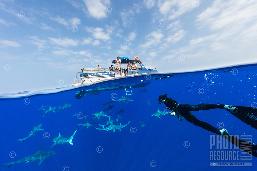 Crew members of a pelagic dive tour One Ocean Diving educate their customers on shark biology and conservation efforts while a free diver swims to the surface off of O'ahu.