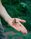 PERU, Amazon Rainforest, South America, Latin America, close-up of a butterfly sitting on human hand