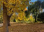 Łańcut, 2018-25-11. Ogród w parku krajobrazowym przy Zamku Lubomirskich i Potockich w Łańcucie.