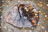 Rock pool and Reflection, Raven Rock State Park, Lillington, North Carolina, USA