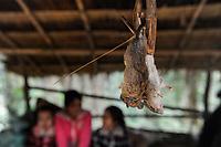 LAO PDR, market with rodents for sale to eat, wild animals cause transmission of virus from animal to human  / Laos, Bergbewohner verkaufen wilde Tiere, Nagetiere zum essen, Übertragung von Krankheiten
