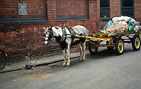 Horse tied to Rag and bone cart. London approx 1974
