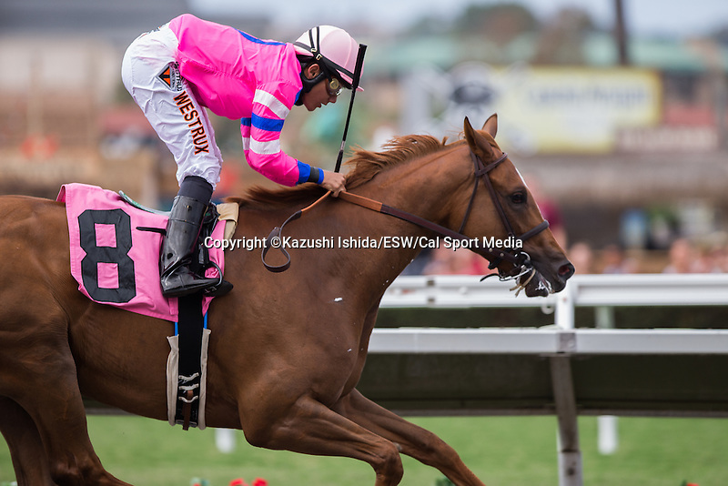 AUG 13,2014:Majestic Presence,ridden by Elvis Trujillo,wins the maiden race,5R at Del Mar in Del Mar,CA. Kazushi Ishida/ESW/CSM