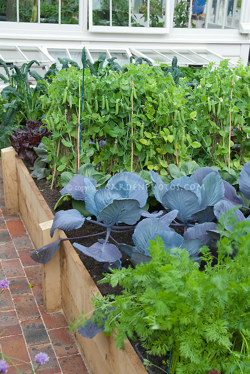 Beans On Poles, Cabbages, Carrots, Kale, Raised Beds, Greenhouse At Rear