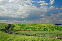 Roadway winding through agricultural fields, Tuscany, Italy