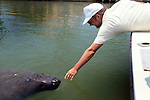 Manatee With Person