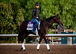 OCT 28: Breeders' Cup Dirt Mile entrant Omaha Beach, trained by Richard E. Mandella,  at Santa Anita Park in Arcadia, California on Oct 28, 2019. Evers/Eclipse Sportswire/Breeders' Cup
