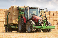 Massey Ferguson and a Heath chaser stacking bales of Barley straw<br /> &copy;Tim Scrivener Photographer 07850 303986<br />      ....Covering Agriculture In The UK....
