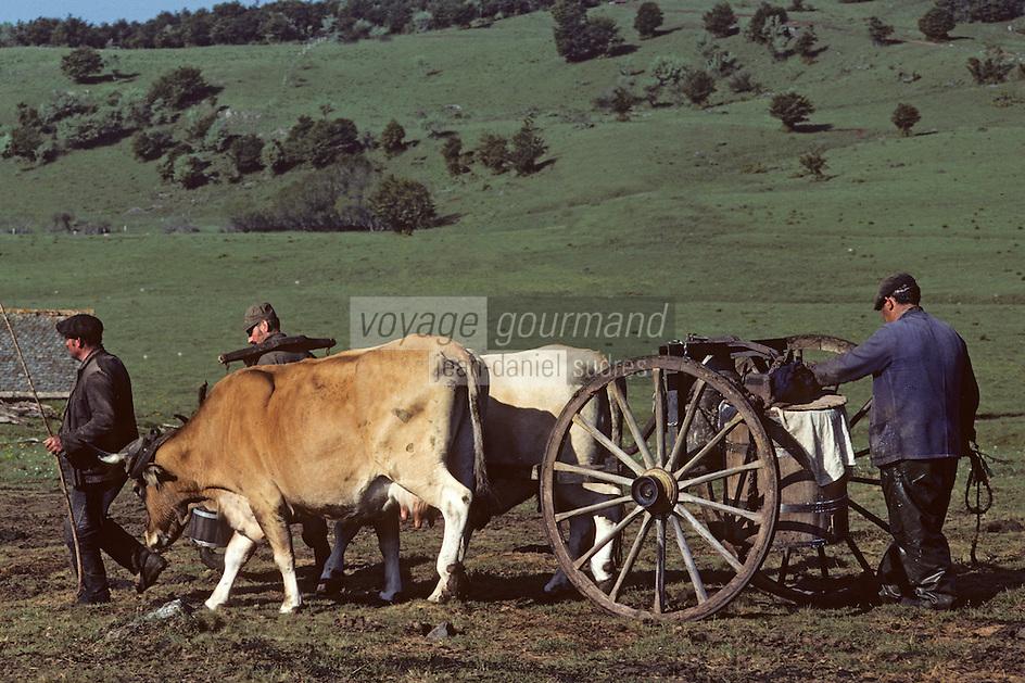 Europe/France/Auvergne/12/Aveyron: Aubrac - Transport du lait au buron de canut - Fourme de Laguiole AOC <br /> PHOTO D'ARCHIVES // ARCHIVAL IMAGES<br /> FRANCE 1980