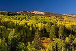 Pinecrest Fall Exteriors & Views