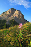 Fireweed and the mountain at Gateway Gorge in the Bob Marshall Wilderness in Montana