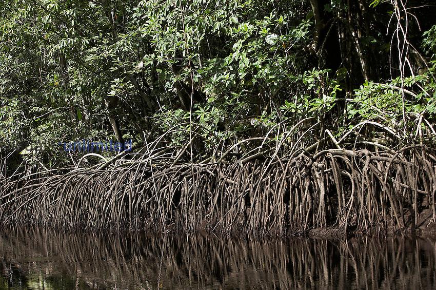 Forest and Mangroves along the Orinoco River Delta, Venezuela