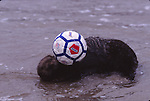 sea otter with soccer ball