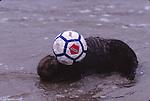 Animals playing human sports