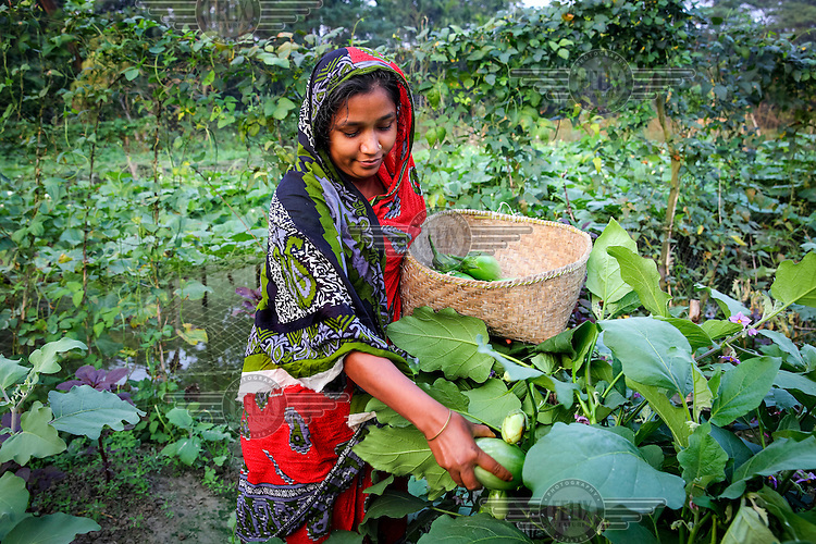 Laila Begum harvesting vegetables from her market garden which she set up with help from NGO Dwip Unnayan Songstha (DUS).