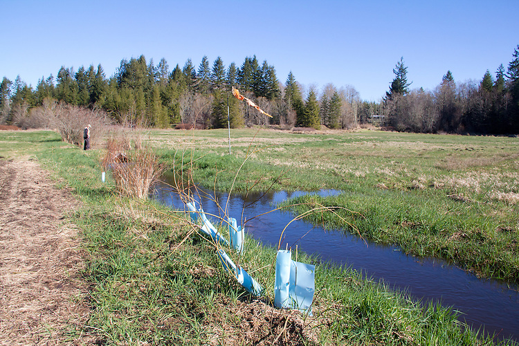 Volunteers planting trees, Eaglemount Farms, Chimacum Creek, North Olympic Salmon Coalition, Jefferson County, Washington State, Pacific Northwest, United States, habitat restoration,