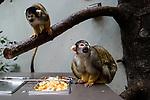 Lunch is served! Primates, which share 98 percent of our DNA, could be at risk from COVID-19. Due to a coronavirus pandemic (COVID-19), Servion Zoo is closed to the public. Servion, Switzerland, April 30, 2020.<br /> Le repas est servi! Les primates, qui partagent 98 pourcent de notre ADN, pourraient etre en danger face au COVID-19. Pour cause de pandemie de coronavirus(COVID-19), le zoo de Servion est ferme au public. Servion, Suisse, le 30 avril 2020.