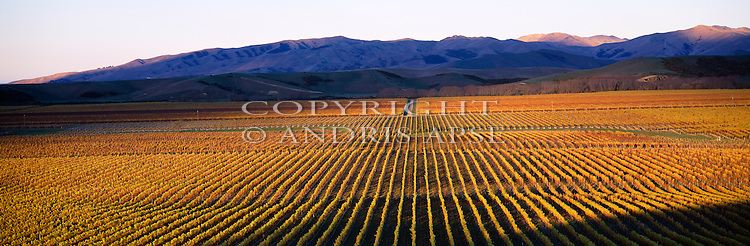 Last light on vineyards at Brancott Estate. Marlborough New Zealand.