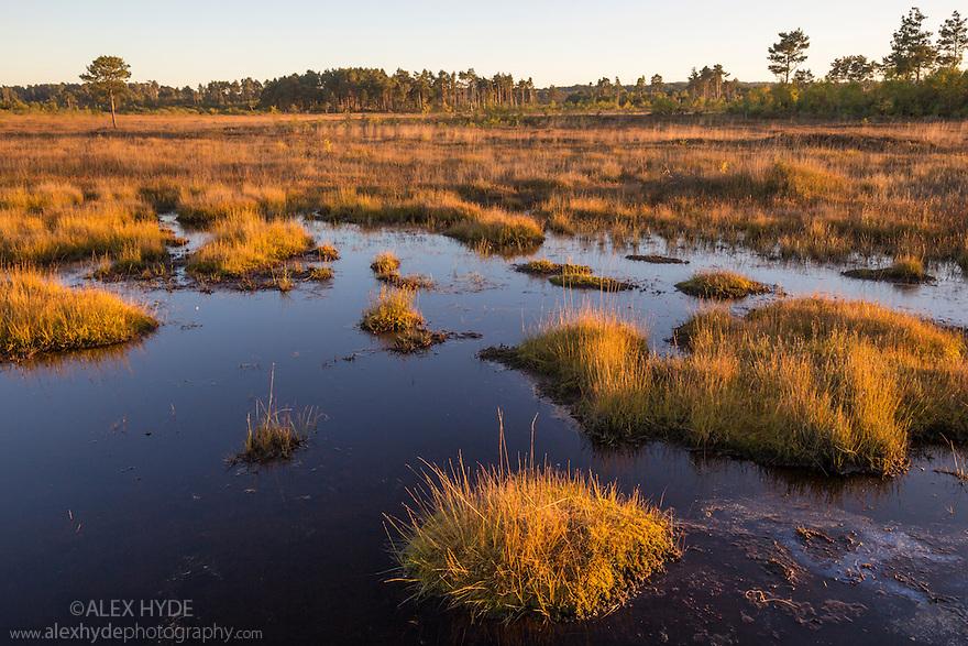 Thursley Common National Nature Reserve, Surrey, UK. October.