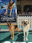Doggs & friend at the Warner Bros. Pictures World Premiere of Cats & Dogs Revenge of Kitty Galore held at The Grauman's Chinese Theatre in Hollywood, California on July 25,2010                                                                               © 2010 Debbie VanStory / Hollywood Press Agency