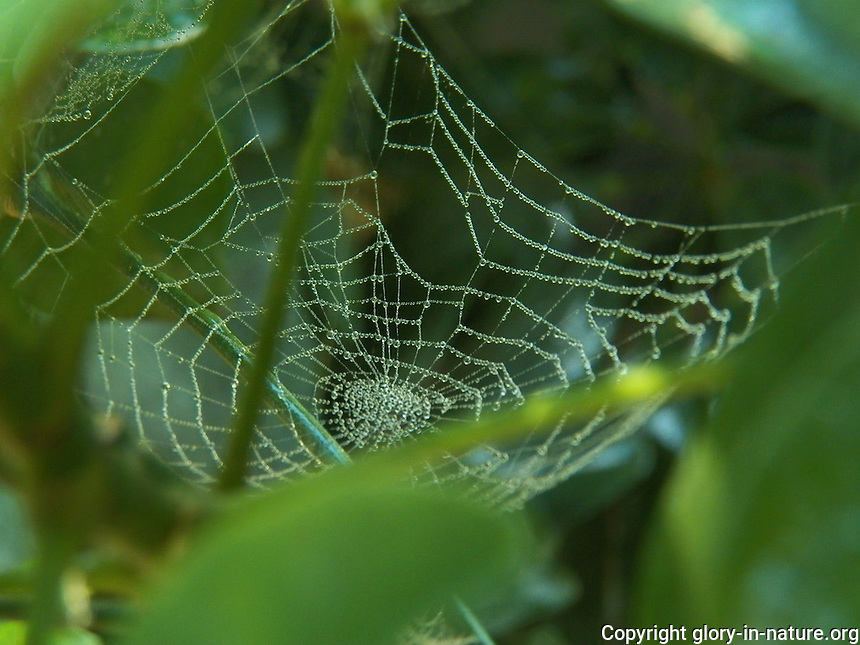 The mist from the tropical display outlines this spiderweb.