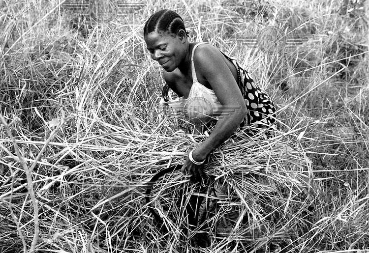 ©Heldur Netocny/Panos Pictures..Tanzania. A woman is cutting thatching-grass near the village of Matetereka, Songea province.