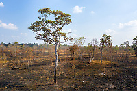 A burnt field in the Beng Per Wildlife Sanctuary, in northern Cambodia. The sanctuary is a sanctuary in name only, as most of the land has been sold by the government for agricultural concessions. The South East Asian country has one of the fastest rates of deforestation in the world and it is estimated only 3% of primary forest is left throughout the country. Forest clearance is fuelled by demand for agricultural land and high value species of tree for the Asian furniture market.