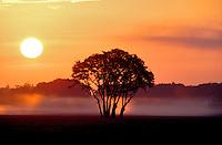 F00051.tiff   Sunrise over farmland with fog and oak grove. Near Corvallis, Oregon