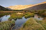 Beaver pond and morning light on Monument Ridge, Green Creek area, Toiyabe National Forest, California