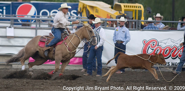 Mike Johnson, from Henryetta, OK lassos a calf during the Tie Down Roping at the Kitsap County Fair and Stampede  held Aug. 26 to Aug. 30, 2009 in Silverdale, WA.  Jim Bryant Photo. All Right Reserved. © 2009
