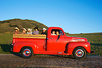 Country kids in the old Ford Truck, San Luis Obispo, California