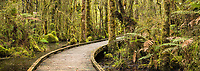 Boardwalk through boggy rainforest at Ship Creek near Haast, UNESCO World Heritage Area, South Westland, New Zealand, NZ