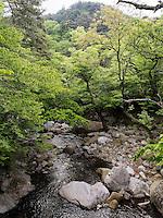 Bach beim buddhistischen Tempel Heinsa nahe Daegu, Provinz Gyeongsangnam-do, S&uuml;dkorea, Asien<br /> creek at temple heinsa near Daegu,  province Gyeongsangbuk-do, South Korea, Asia