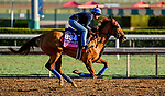 October 28, 2019 : Breeders' Cup Juvenile Fillies Turf entrant Sharing, trained by H. Graham Motion, exercises in preparation for the Breeders' Cup World Championships at Santa Anita Park in Arcadia, California on October 28, 2019. Scott Serio/Eclipse Sportswire/Breeders' Cup/CSM