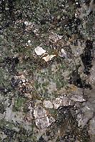 Mineral, Mineralien, Muskovit (silber) und Turmalin (grün) in Stein eingeschlossen, Muscovite, common mica, isinglass, potash mica