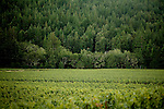 Where vineyards meet the redwoods, in Anderson Valley, a two-hr drive north of San Francisco. This 25 mile valley has become an internationally known appellation.