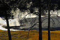 Hot water geysers and its run off at the Yellowstone National Park in Wyoming
