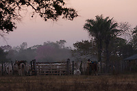 n the Pantanal, the world's largest and wildest wetland, in Brazil, Pantanero (cowboys) open the ranch in sunrise to drive the cattle to daily fresh forage in the incredible landscape that is sharing with wildlife, including the beautiful and mysterious jaguar. Jaguars have typically been hunted by people who are trying to protect their cows