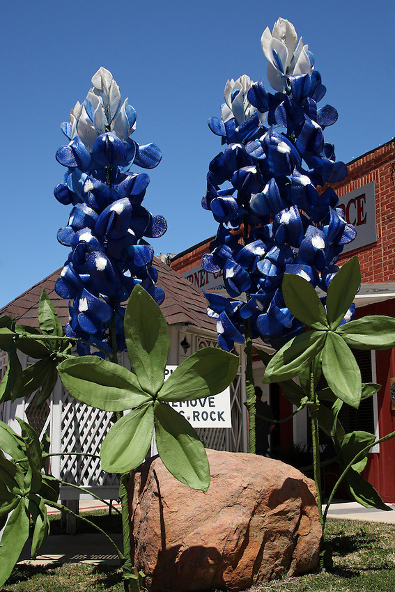 These 15 foot man made Bluebonnets are at Burnet Texas, in front of the Chamber of Commerce. The Spring Bluebonnet Festival kicks off today (04-09-10), and runs through the weekend..