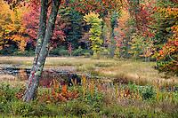 Autumn scenic, Maine, USA
