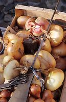 Europe/France/Auvergne/12/Aveyron/Villefranche-de-Rouergue: Oignons doux et échalotes sur le marché de la place Notre-Dame