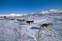 Mitch Seavey In Rainy Pass Area Alaska.2004 Iditarod