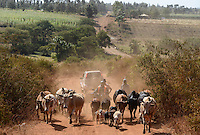 KENYA, Mount Kenya East, Region South Ngariama , extreme drought due to lack of rain has caused massive water problems, farmer with cattle on dusty road / KENIA, extreme Duerre durch fehlenden Regen sorgt fuer Wasserprobleme