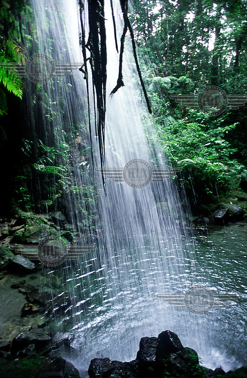 The Emerald Pool, a waterfall in the Central Rainforest Reserve, is a tourist attraction visited by cruise ship day trippers.