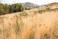 Grassland, Methow Valley