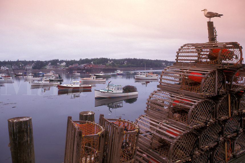 lobster trap, Bass Harbor, Maine, Atlantic Ocean, A seagull sits on top of lobster traps overlooking the fishing boats buoyed in the quiet Bass Harbor of Mount Desert Island.