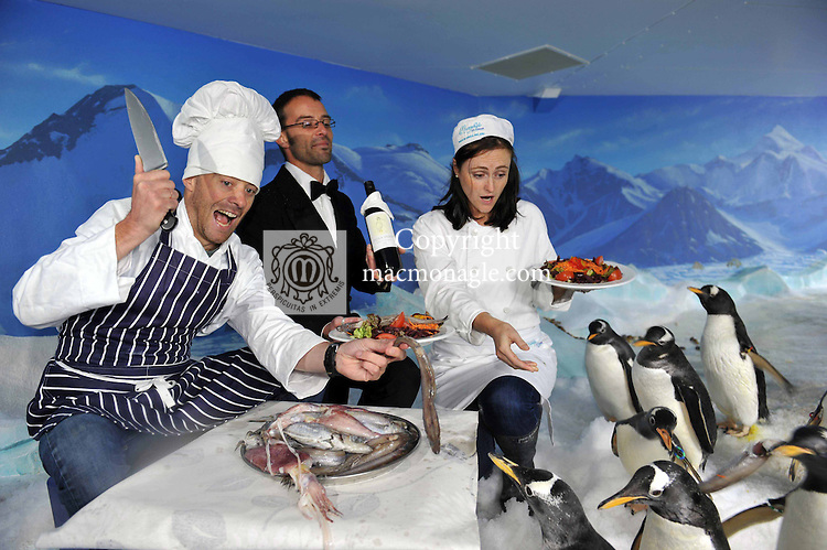 C...c..c...come dine with me in D...D...Dingle<br /> For one night only, the Penguins at the Dingle Aquarium, will play host to a pop-up restaurant as part of the forthcoming Dingle Peninsula Food &amp; Wine Festival which will take place over the weekend of the 30 September to the 2nd October 2011.  Local chefs, Kevin Murphy and Sinead Sheehy will be serving up a feast of local seafood to diners in the Penguin enclosure on the Saturday night of this gastro extravaganza which has become one of the key dates in the annual foodie calendar. The festival will also feature the 4th annual Blas na hEireann Awards where the judging of over 1,000 of the country's finest produce will culminate in a free sampling in Benner&rsquo;s Hotel. <br /> For further information click wwwdinglefood.com   <br /> Photo shows chef Kevin Murphy and Sinead Sheehy with waiter Lenoble Bourges feeding the penguins at Dingle Oceanworld on Tuesday at the festival launch.<br /> Picture by Don MacMonagle<br /> <br /> free pr photo Blas na h-Eireann awards