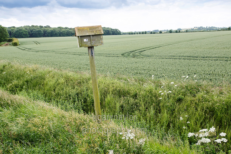 Winter wheat field margin with owl box - Lincolnshire, June